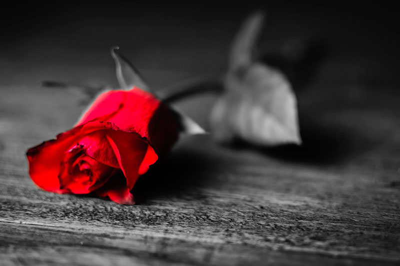 red rose sad death poem