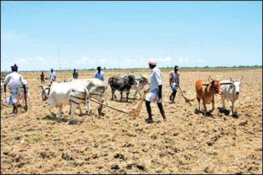 farmers in vanni, sri lanka